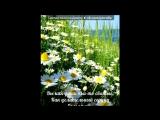 «Ромашковое утро))*» под музыку Ромашки  - самые прекрасные цветы на свете ,такие нежные и красивые . Picrolla