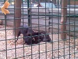 канадские волки в зоопарке Фельдмана