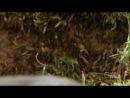 32. Горностай гипнотизирует кролика
